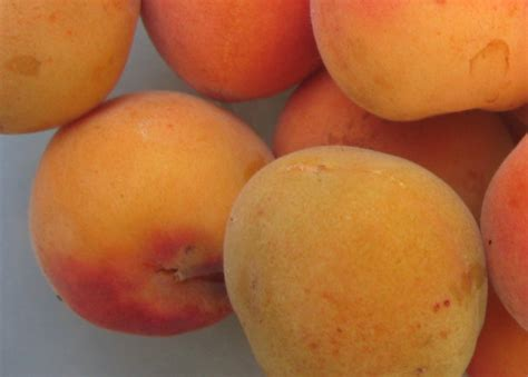 62 g carbohydrates apricots 183 dehydrated low moisture 126 calories