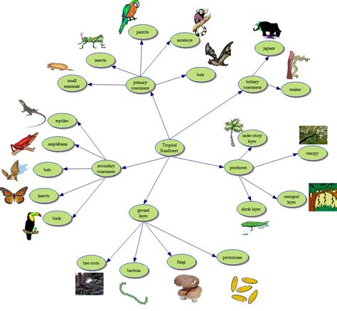 forest food chain diagram diagram forest food chain diagram