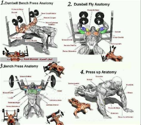 chest workout quotes