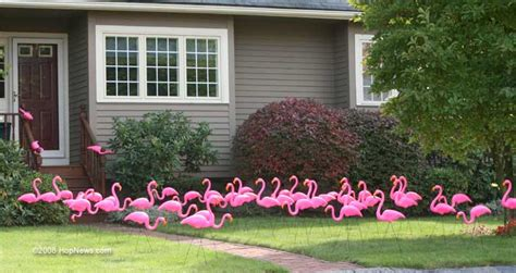 pink flamingos in the front yard b mrs s columbia s hometown