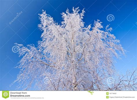 Frozen Sky Blue white frozen tree and blue sky stock photography image