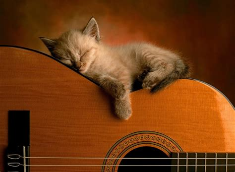 Cat Guitar Wallpaper | top 10 most beautiful animal cat wallpapers bollywood