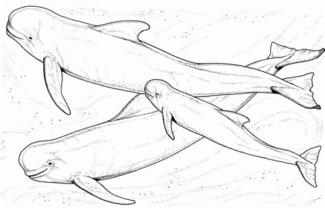coloring page humpback whale humpback whale coloring pages coloring home