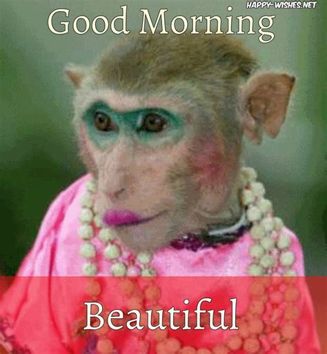 imagenes de good morning chistosas 8 good morning wishes with monkey images happy wishes