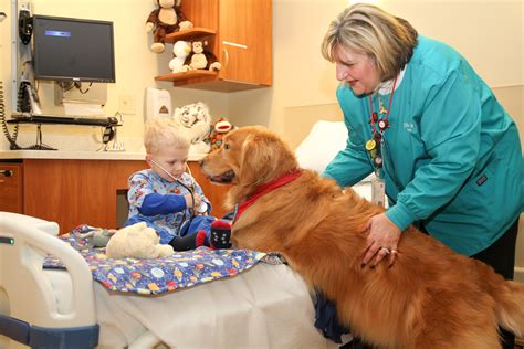 pet therapy what is pet therapy can it help in curing depression