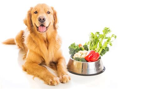 what veggies can dogs eat can animals here this explanation and 20 pictures animals who
