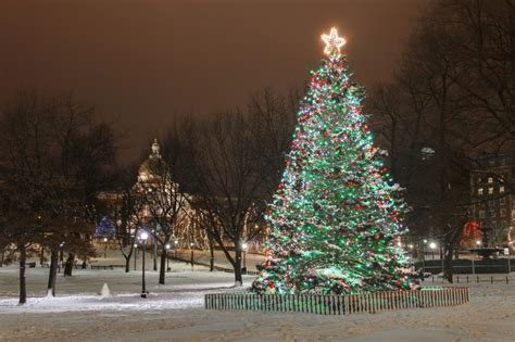 buying a christmas tree in boston the ultimate guide to in boston