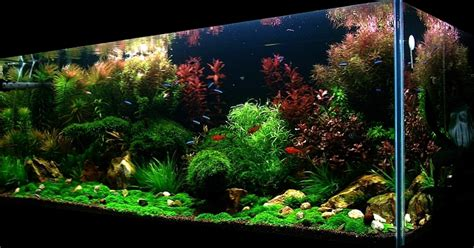 small aquarium aquascape small aquarium aquascape bubbles aquarium aquascapes tank