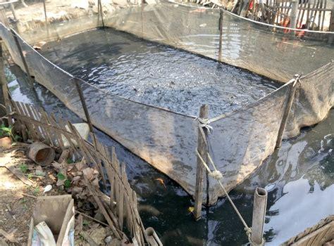 Jual Bibit Lele Jakarta Barat jual ikan lele di petogogan kebayoran baru jakarta selatan
