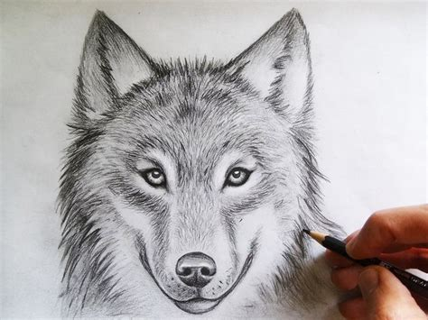 wolves drawings best 25 wolf drawing ideas on