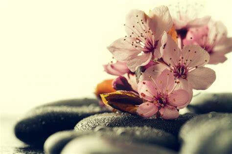 a fiori spa rosa fiori spa su spa calde pietre su acqua bagnato