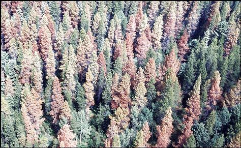 rainforest decke retoring forest health