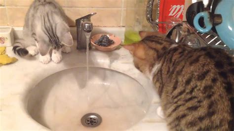 cat water from faucet