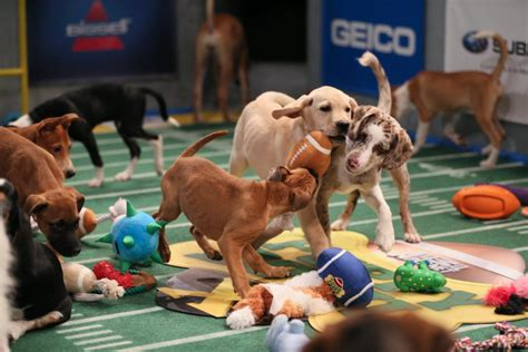 puppy planet puppy bowl x is ruffing things up 183 guardian liberty voice