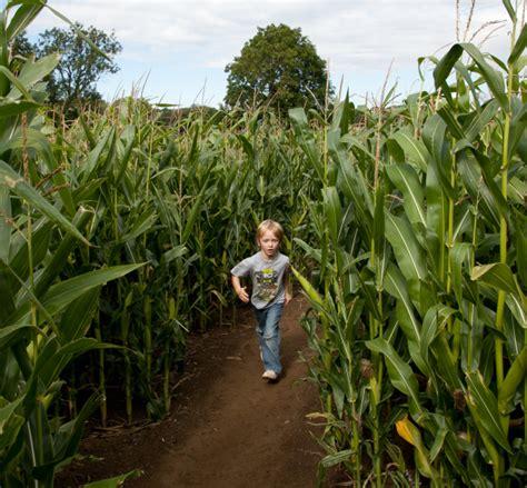 crazy fun corn mazes  san diego