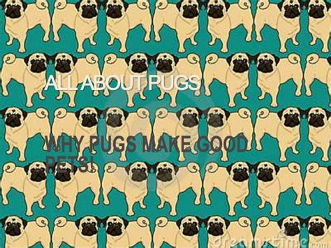 all about pug all about pugs