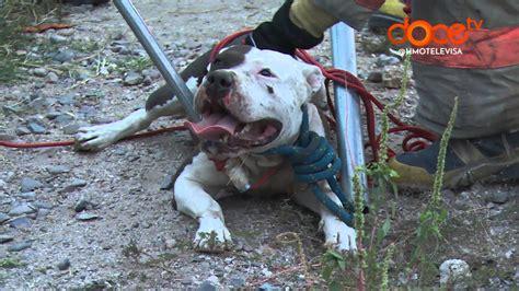 perros matan   hombre en la colonia  griega youtube