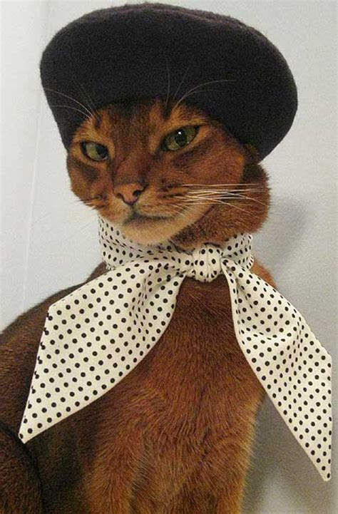 Cat Wardrobe by Our Favorite Moments In Cat Fashion For 2012 Catster