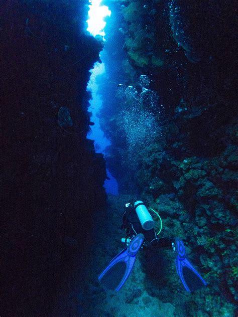 roatan dive s place roatan roatan diving at island diving