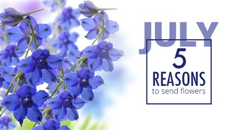 Reasons To Send Flowers by 5 Reasons To Send Flowers July 16