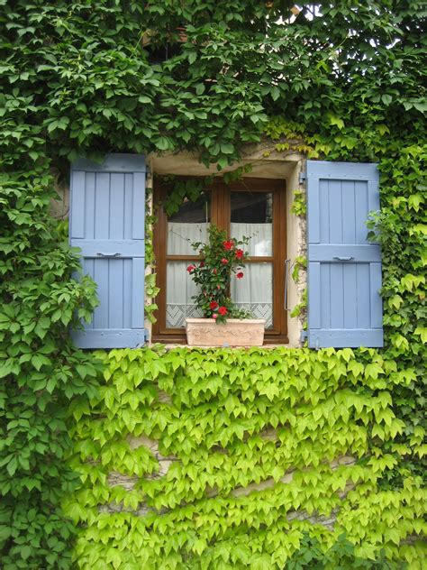 backyard vines free images fence lawn house flower building home