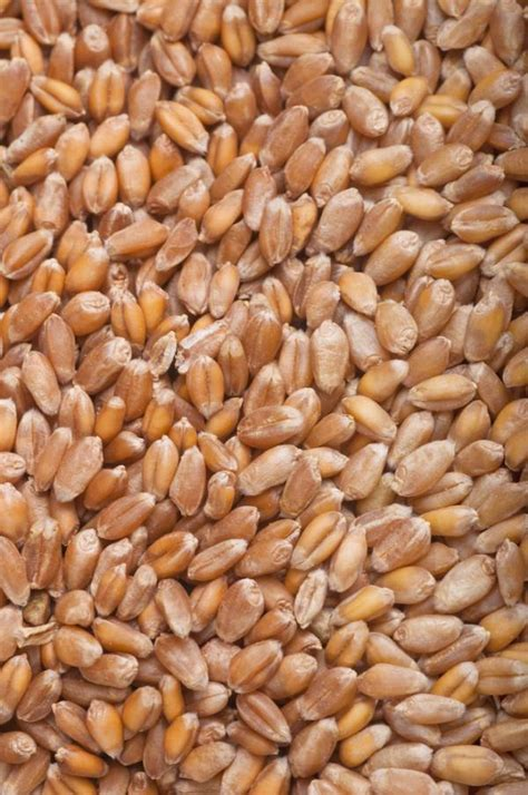 whole grains lectins dissecting anti nutrients the and bad of phytic acid