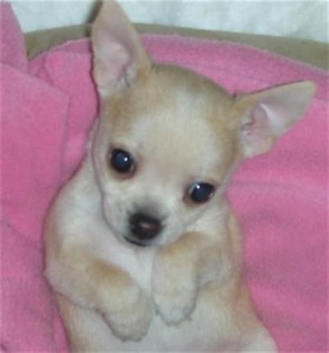 free puppies sc dogs sumter sc free classified ads