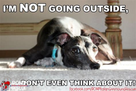 Cold Outside Meme - funny cold weather dogs memes