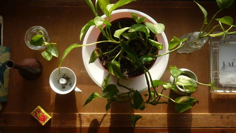 plants for apartments apartment living 101 the 10 best plants for apartment