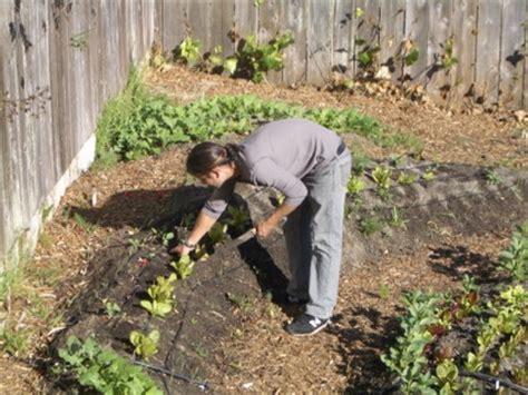 Organic Urban Vegetable Gardening For Dummies Vegetable Gardening For Dummies