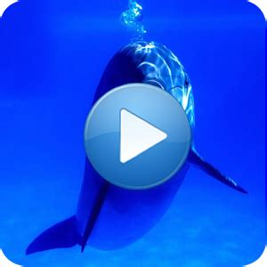 dolphins sound to relax android apps on google play