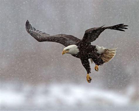 birds of wisconsin winter pinterest