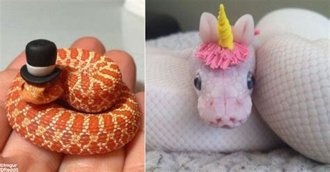 cute snake pictures     conquer  fear