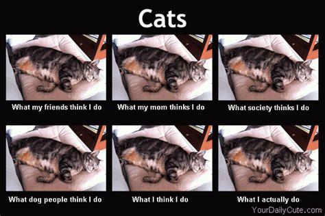 u think i do on meme and calico cats