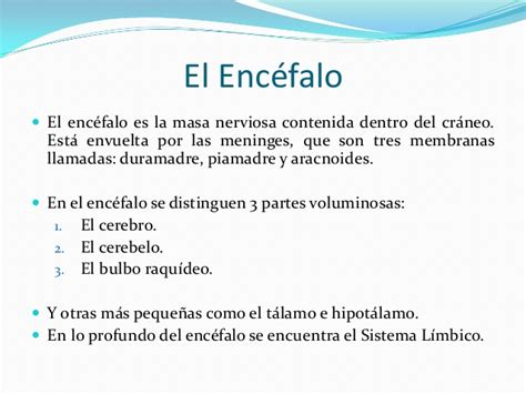 Resumen Y Sus Partes by El Encefalo Sus Partes Y Funciones