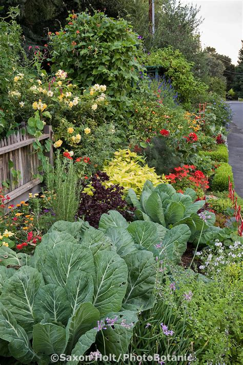 Streetside Ornamental Vegetable Garden Border Rosalind Ornamental Vegetable Garden Design