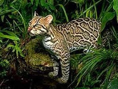 Which Animal Occupies A Rainforest Floor Niche - animals recreating rainforests