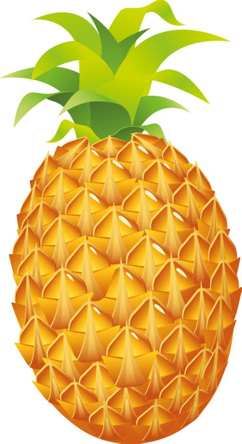 clipart pineapple best pineapple clipart 3176 clipartion