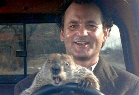 bill murray groundhog day xavier what does the swimmer s groundhog day look like