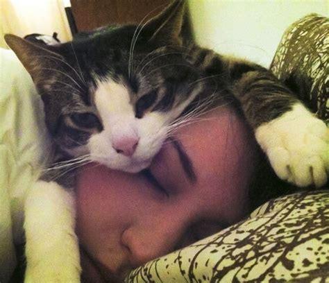 dormire abbracciati al cuscino sleepy caturday this is how sleeps at meow