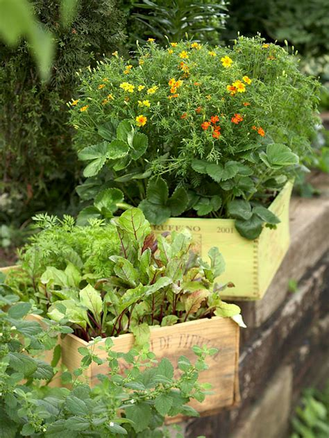 container gardening complete creative projects for growing vegetables and flowers in small spaces books fresh ideas for growing vegetables in containers