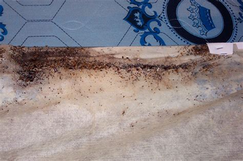 can bed bugs live in electronics prevention and control of bed bugs in residences insects