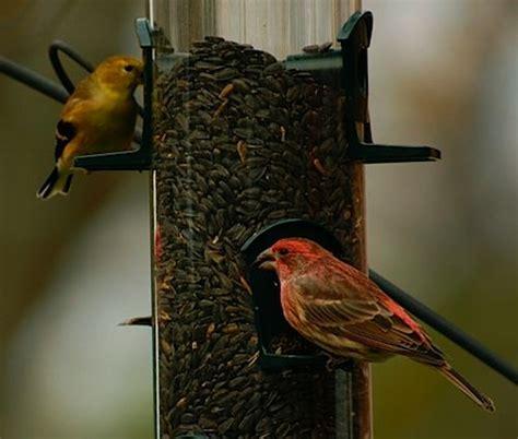 is cheap bird seed a good deal birdchick
