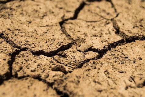Garten Gestalten Trockener Boden by Pflanzen F 252 R Sandigen Boden Auswahl Und Bodenverbesserung