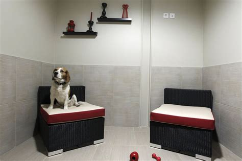 home grand pet hotelgrand pet hotel first luxury pet hotel parisian actuel dogs extravaganzi