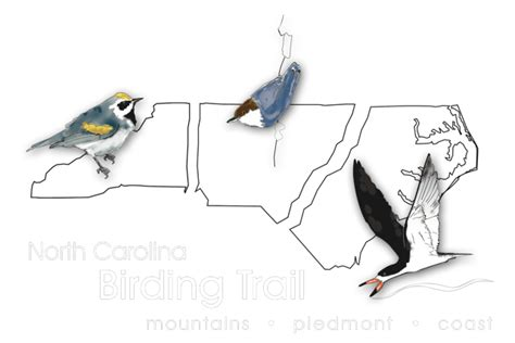 who we are nc birding trail