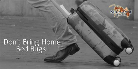 bed bugs don t bring signs you have a pest infestation multi pest services