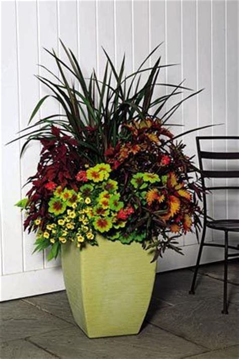 Container Plant Ideas Front Door by The Seattle Times Outdoor Plant Containers Pretty
