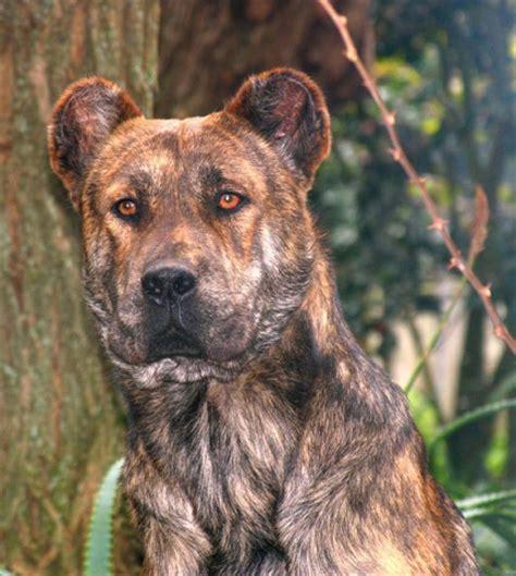 how to herding dogs herding dogs breed inside dogs world