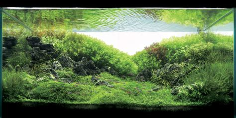 aquascaping magazine aquascaping world magazine interview with andre cardoso